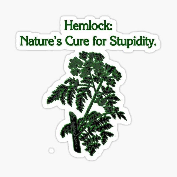 Cure for Stupid Hemlock Plant Dark Humor Sticker
