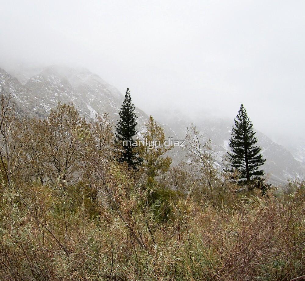 Pine Creek Storm by marilyn diaz