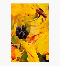 Grapes and Gold Photographic Print