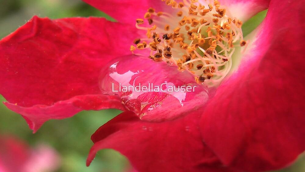 flowering  by LlandellaCauser