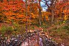 October pool by Yelena Rozov