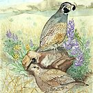 Quail Pair by clotheslineart