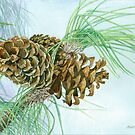 Pine Cones on a Sunny Afternoon by clotheslineart