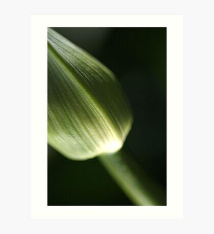 Agapanthus Green Art Print