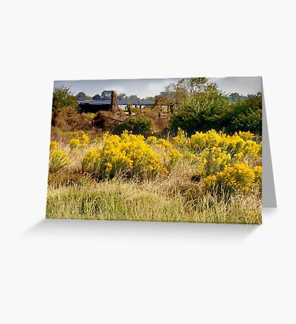Field of Gold Greeting Card