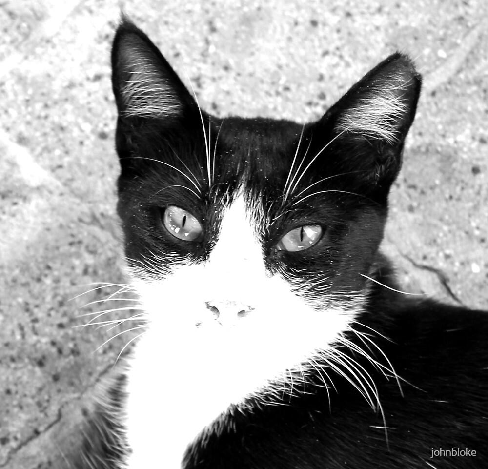 cat by johnbloke
