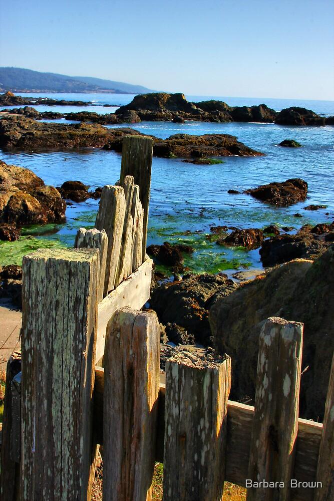 Sonoma Coast by Barbara  Brown