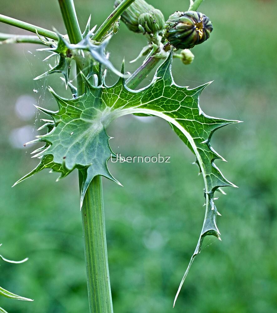 Prickle Weed by Ubernoobz