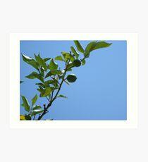 Premature lemon tree Art Print