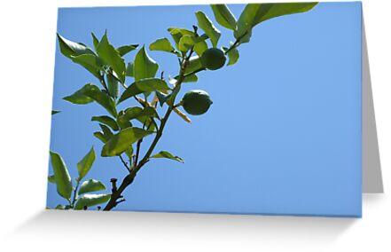 Premature lemon tree by Random Artist No. 2