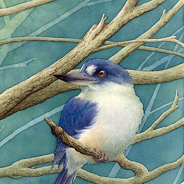 Forest kingfisher by LauraGrogan