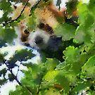 Red Panda by David Carton