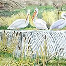 Pelicans Waiting Patiently For Their Next Meal by clotheslineart