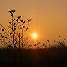 Sunshine over the fields by ienemien
