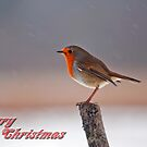 Christmas Robin by M.S. Photography/Art