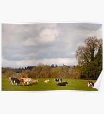 Northamptonshire view with cattle Poster