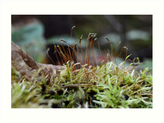 Forest Floor Magic by nadinestaaf