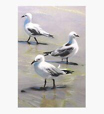 Seagulls Trio Photographic Print
