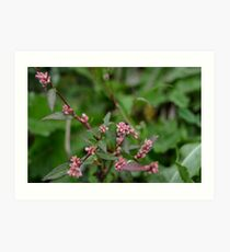 Tiny Pink Buds Art Print