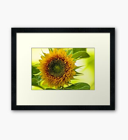 Eyes of the Sun...On 2 Featured Works Framed Print