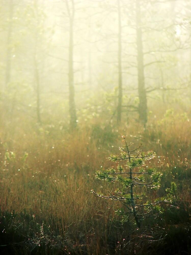 9.11.2011: Beautiful Autumn Day by Petri Volanen