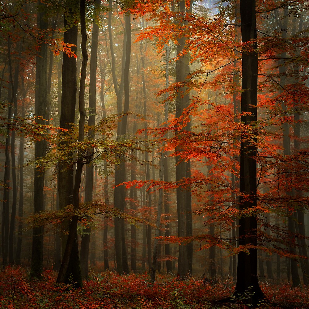 Fall by Philippe Sainte-Laudy