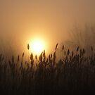 Sunrise by pmreed