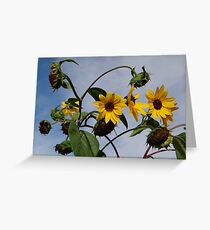 Autumn False Sunflower Greeting Card