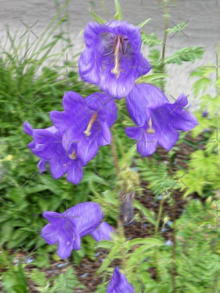 Little Purple Bells by CarolM