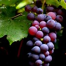 Fruits of the vine by Susan E. King