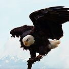 The Bald Eagles at the Westham Island Bridge by David Friederich