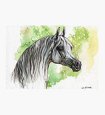 Arabian horse painting Photographic Print