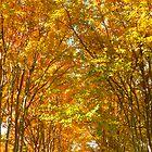 Fall Tree Canopy by Jonathan Green by Jonathan  Green