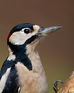 Male Greater Spotted Woodpecker by Neil Bygrave (NATURELENS)