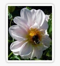 Pollen Perfection Sticker