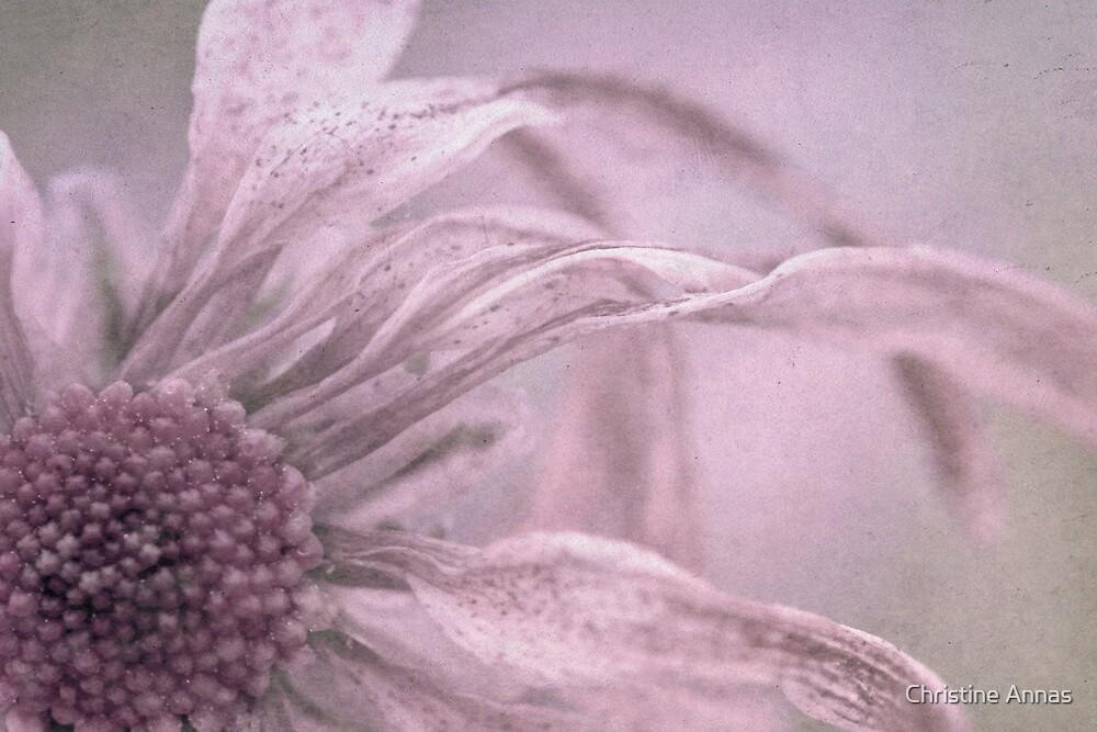 Freckles by Christine Annas