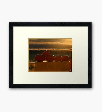 Orange Sunshine Framed Print