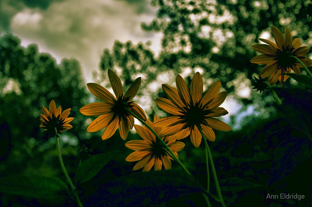VINCENT'S YELLOW by Ann Eldridge