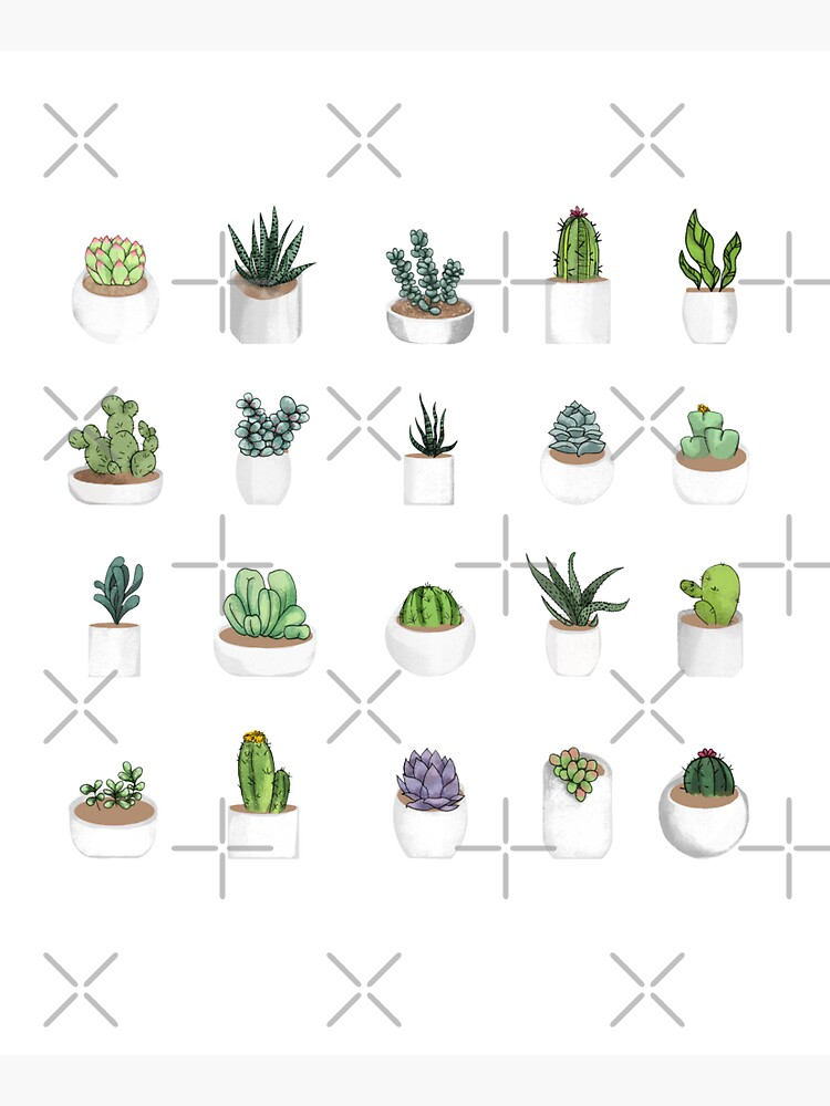 Succulents by katherineblower