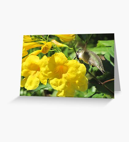 Pollen Face ~ Pollination in Progress Greeting Card