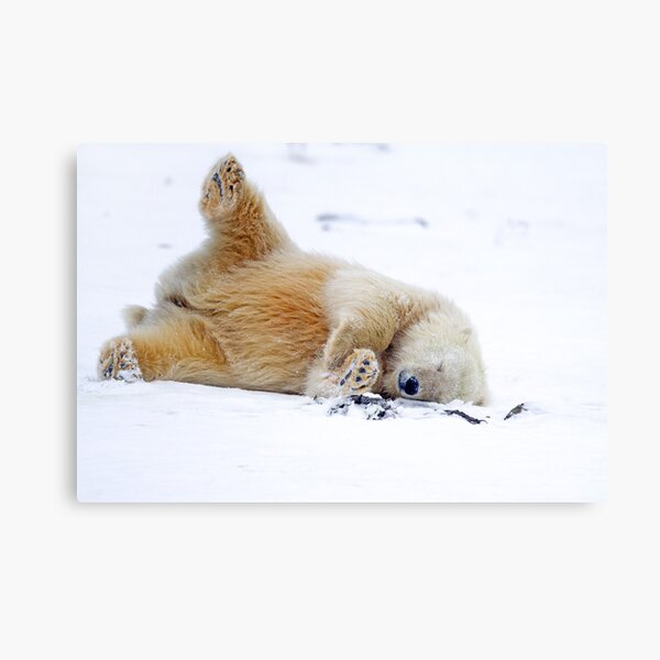 Rolling in the Snow Canvas Print