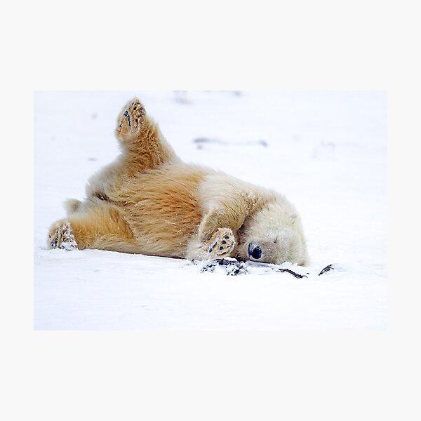 """oder wie wir es verpasst haben """"November 2011 *  * Redbubble Featured Photography Oktober 2012 *  Ein sehr süßes Eisbärenjunges (Ursus maritimus), das spielerisch im Schnee an den Ufern des Beaufortmeeres rollt Fotodruck"""