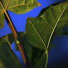 """Uaine """"Oonya"""" ~ Green by Kelly Chiara"""