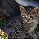 July Kitten by Chriss Pagani