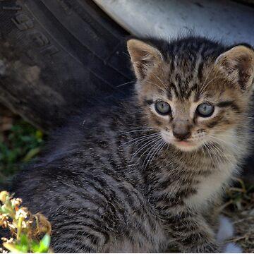 July Kitten by Pagani