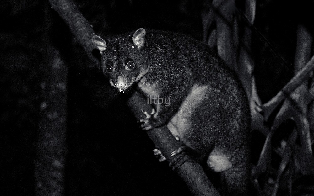 Nighttime Visitor by iltby