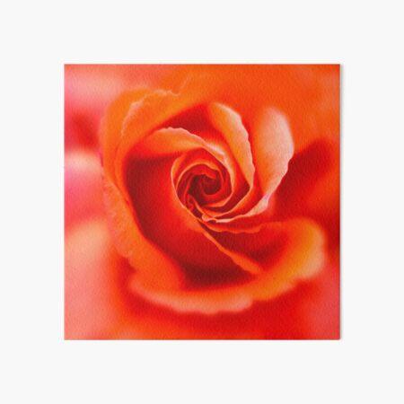 Orange Rose Art Board Print