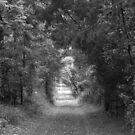 Into The Bush by Alfredo Estrella