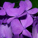 Purple and Raindrops by Kate Eller