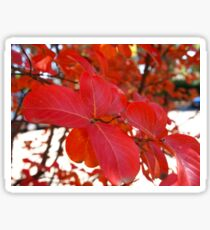 Red Leaves in Autumn 2 Sticker